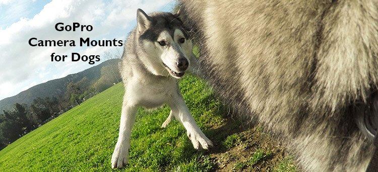 gopro fetch dog harness camera mounts